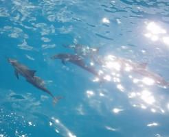 カウアイ島のナパリコーストクルーズツアーはイルカがいっぱい!