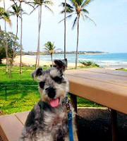 愛犬と一緒の安心ハワイ旅行はこれで決まり!