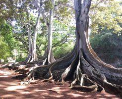 """カウアイ島""""豊かな自然とアート""""の植物園『アラートン・ガーデン』ツアー"""
