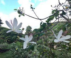 カウアイ島『マクブライド・ガーデン』はハワイの原生植物園