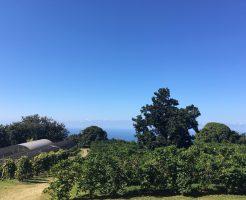 ハワイ島No.1コナコーヒー農園『グリーンウェル・ファーム』日本語無料ツアー♪